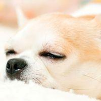 犬と泊まれる宿